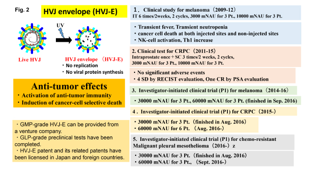 新規免疫治療剤HVJ_図2